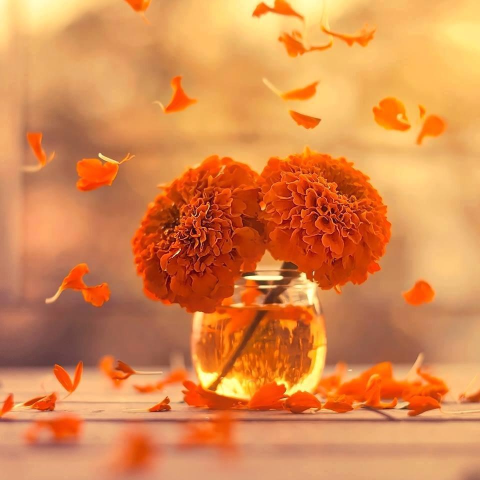 Открытки нежность и осень, открытка