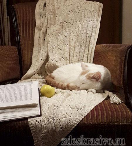 Кот-на-пледе