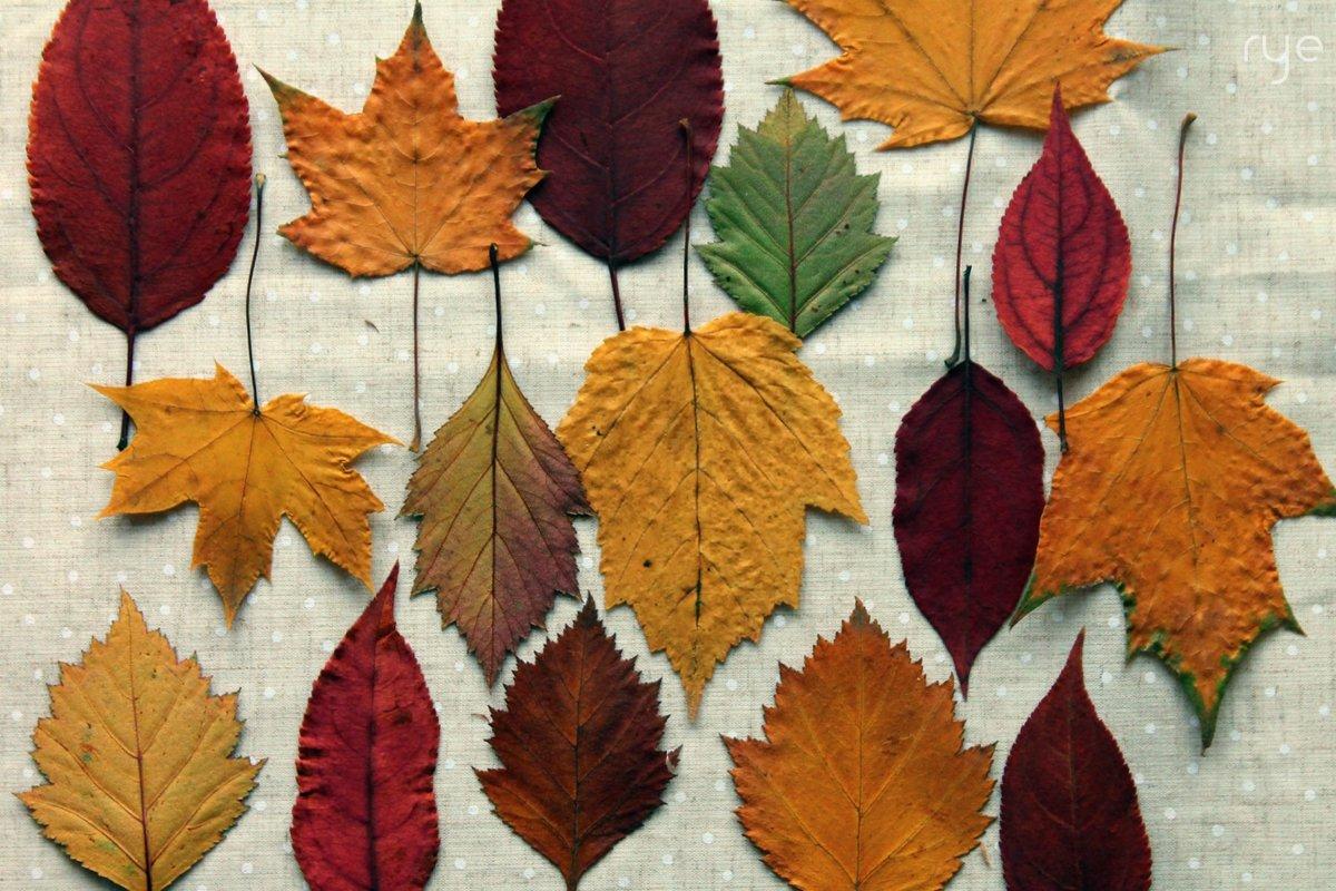 красивые картинки разных листьев которому
