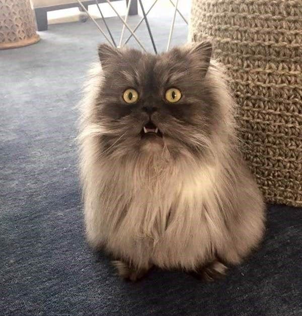 кот, удивление