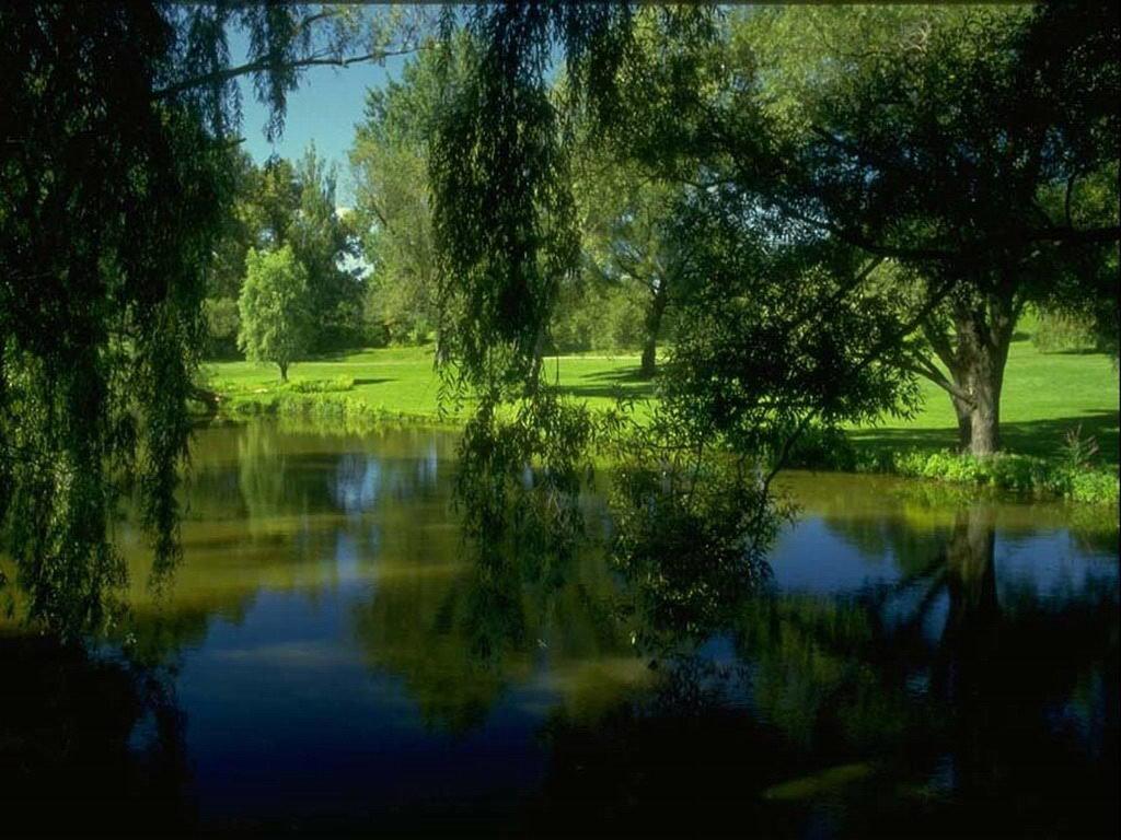 Анимация картинки у озера