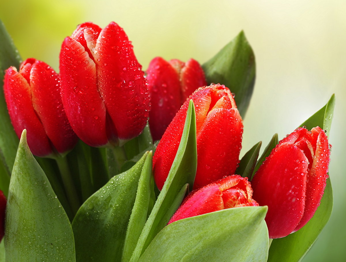 Цветы марта картинки