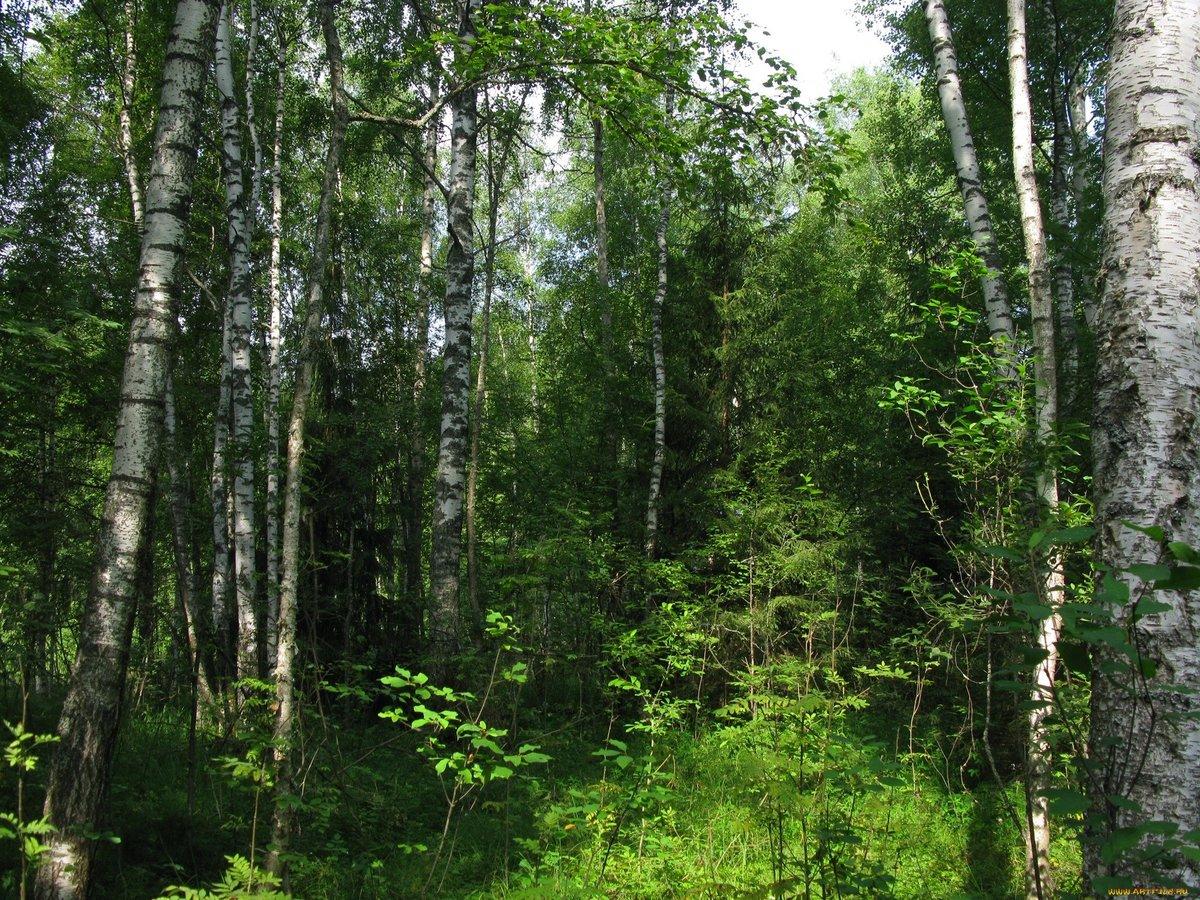 создания картинки лесов россии слову, отец