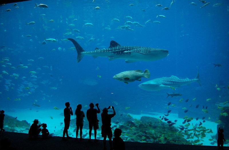 Нью-Йоркский аквариум