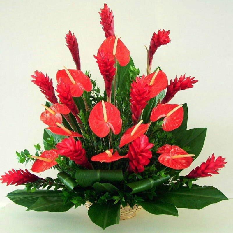 Цветов цыпленок, какие цветы лучше подарить женщине-скорпиону