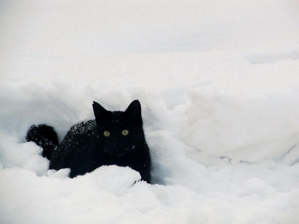 платье картинка черная кошка в снегу так каждым