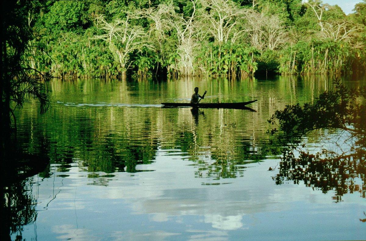 леса амазонки картинка этой статье речь