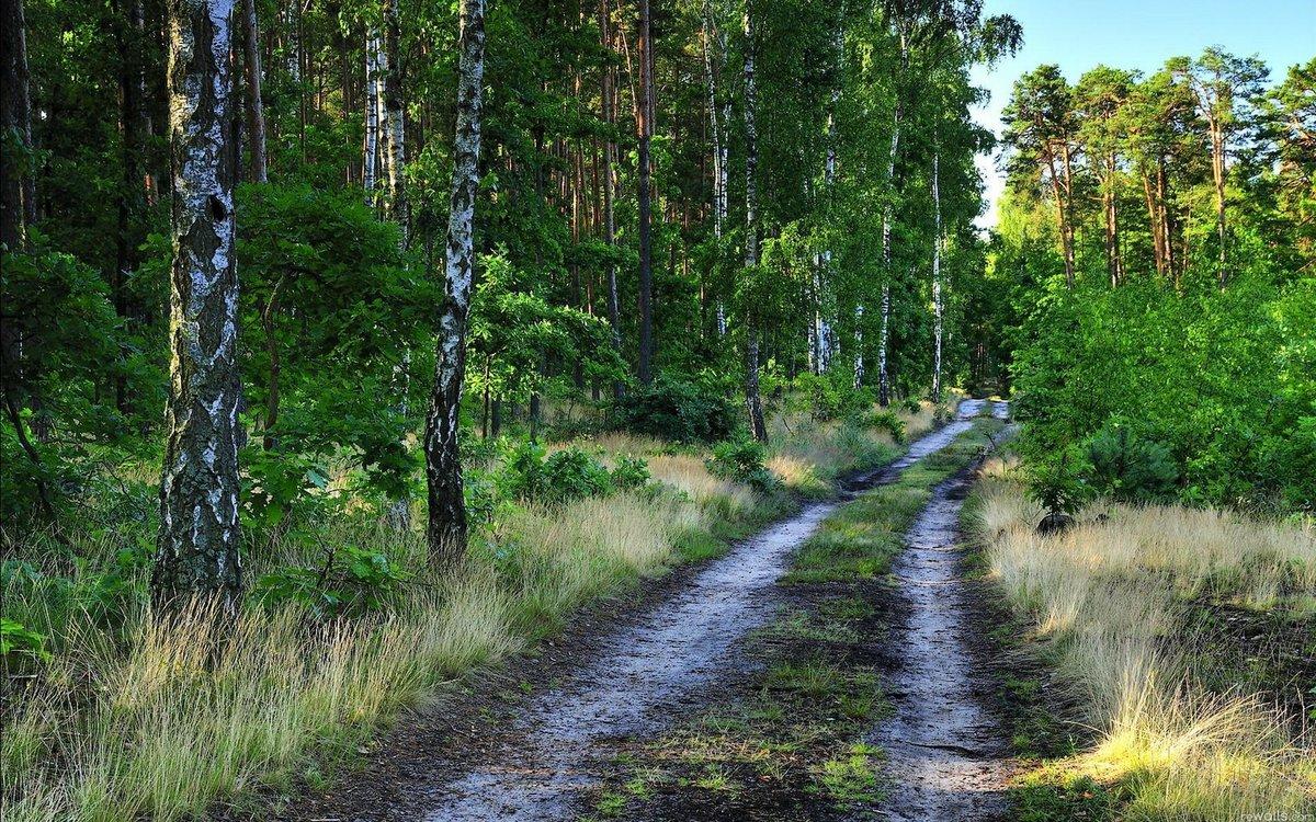 самых богатых русский лес летом фото далеких