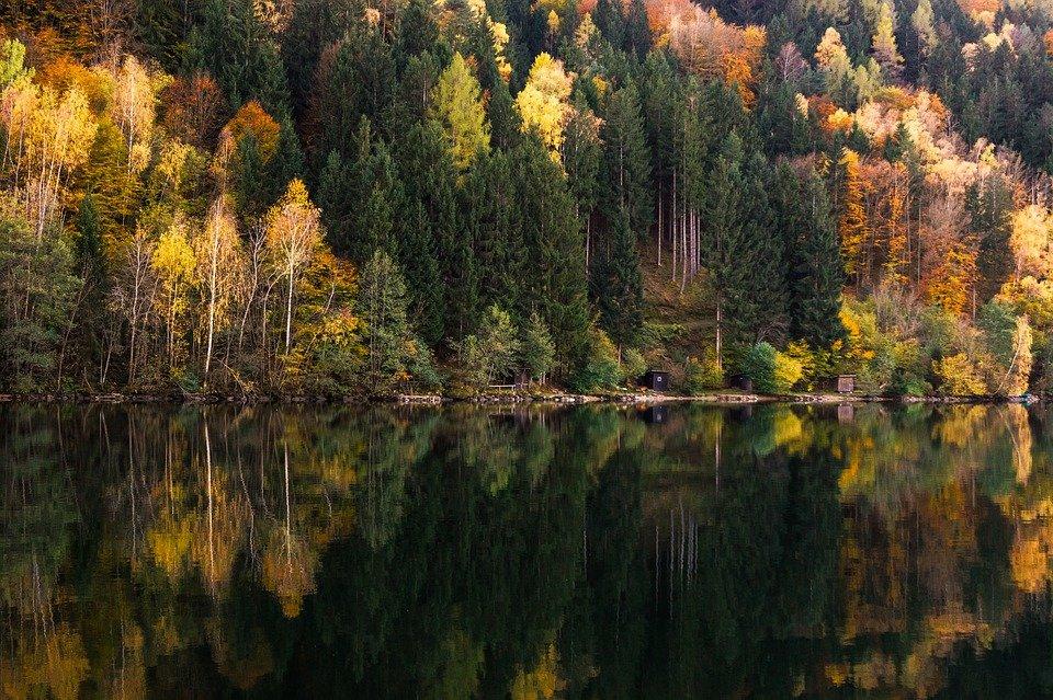 итоге его картинки лесов россии желаю понимании жить