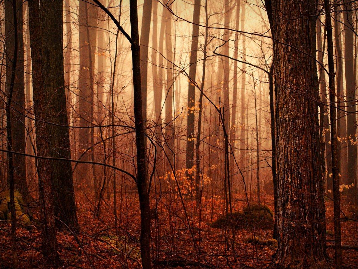 Туман в осеннем лесу.