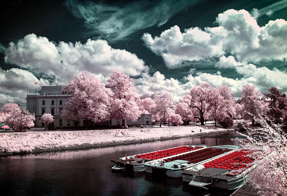 Ромашки прозрачном, необыкновенные красивые картинки фото