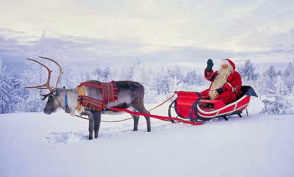 Стоимость аренды оленя на праздники с доставкой и работой каюра — от 15 рублей.