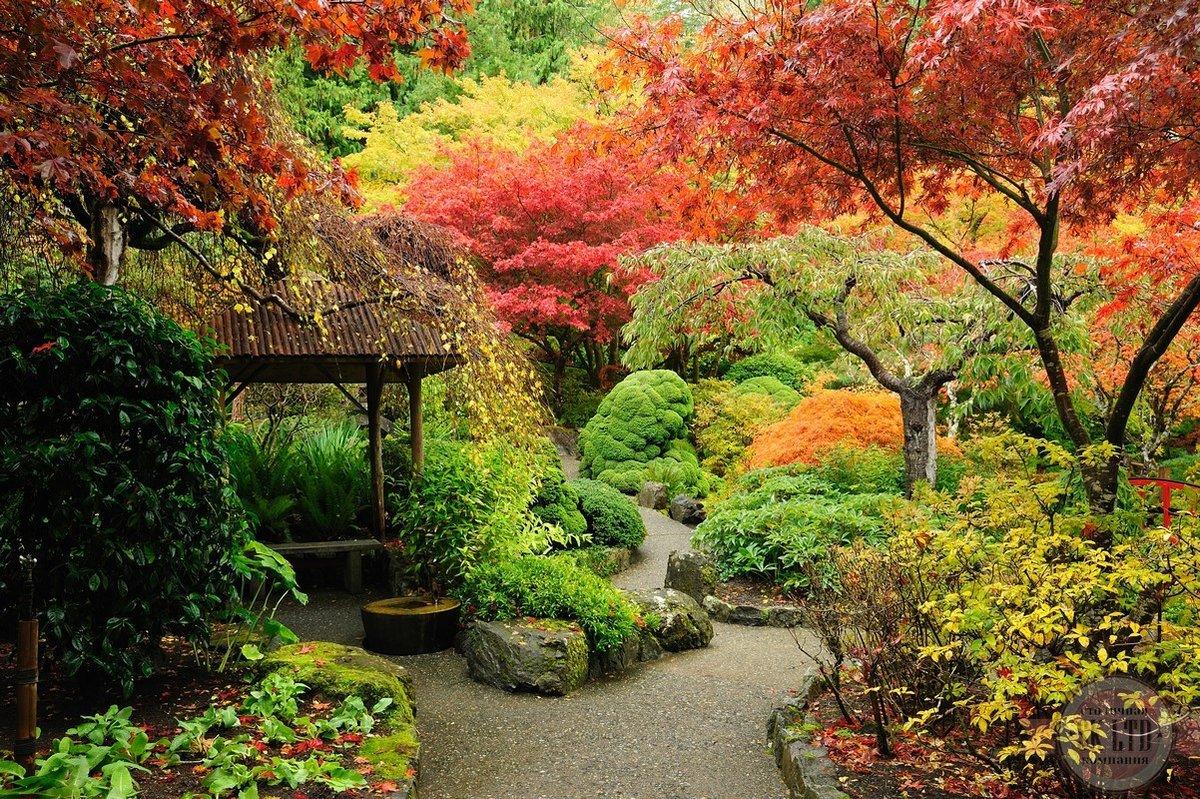 Красивые японские сады фото