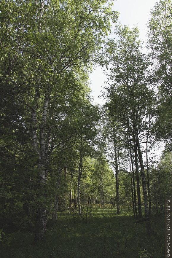 анимации картинки уральский лес горожан