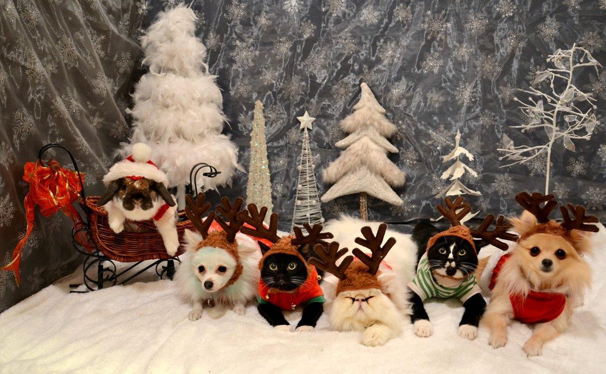 Картинки на рабочий стол животные новый год