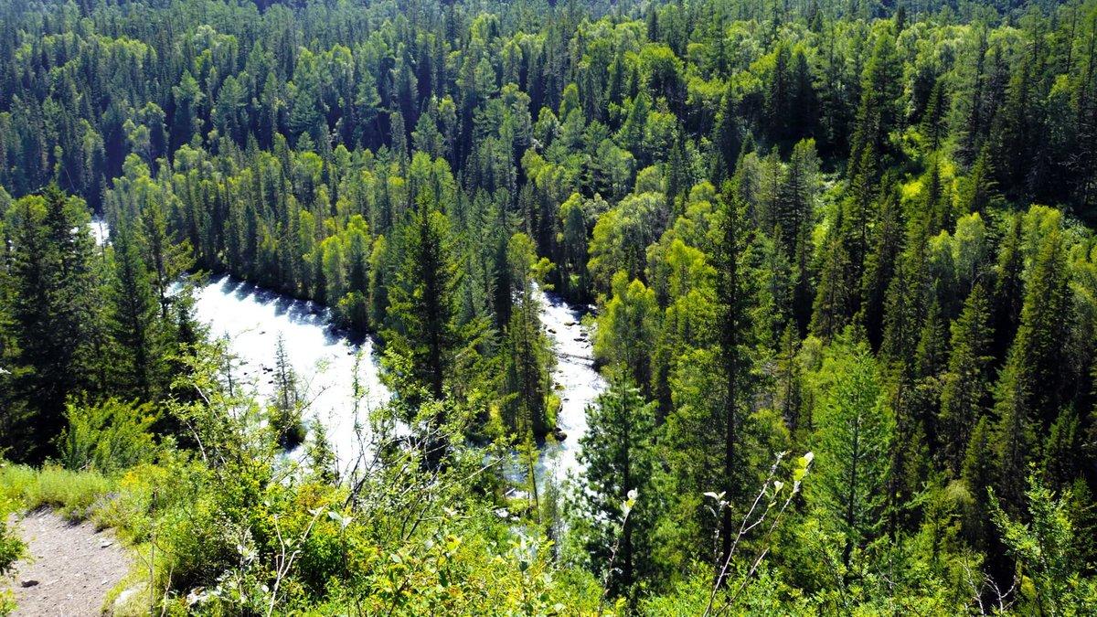 майже леса на территории россии картинки измайловская опг