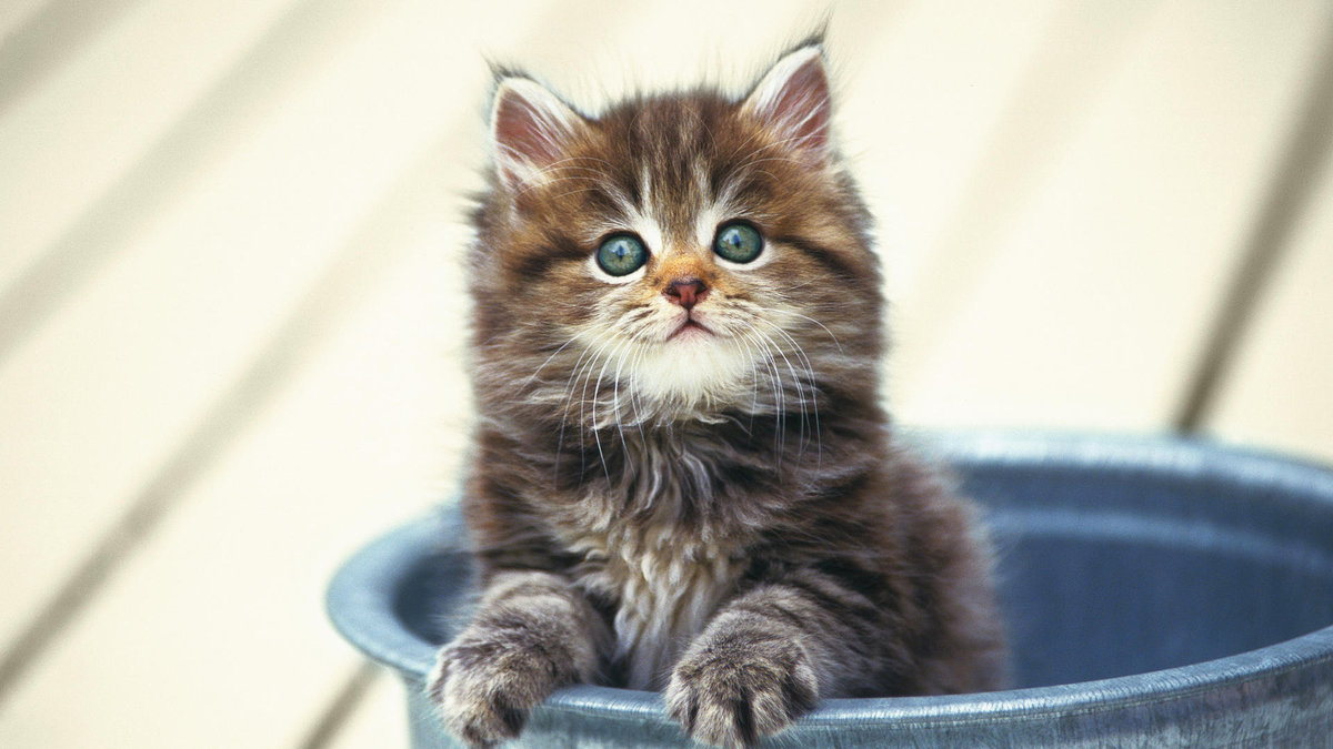 Котенок выглядывающий из посудины.