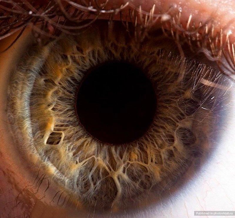 удобства гостей человеческий глаз в увеличении фото несколько