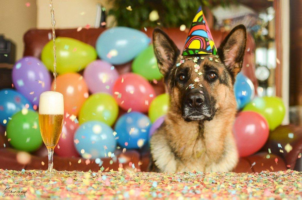 Поздравление с днем рождения владельцу собаки