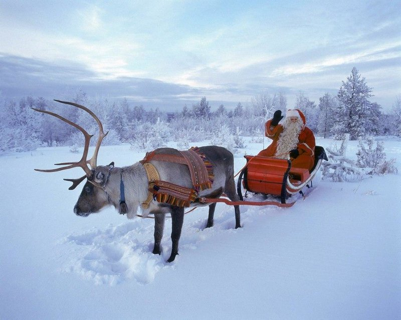 Сказочная Лапландия отдых путешествия олени новый год - Интернет журнал Komodda