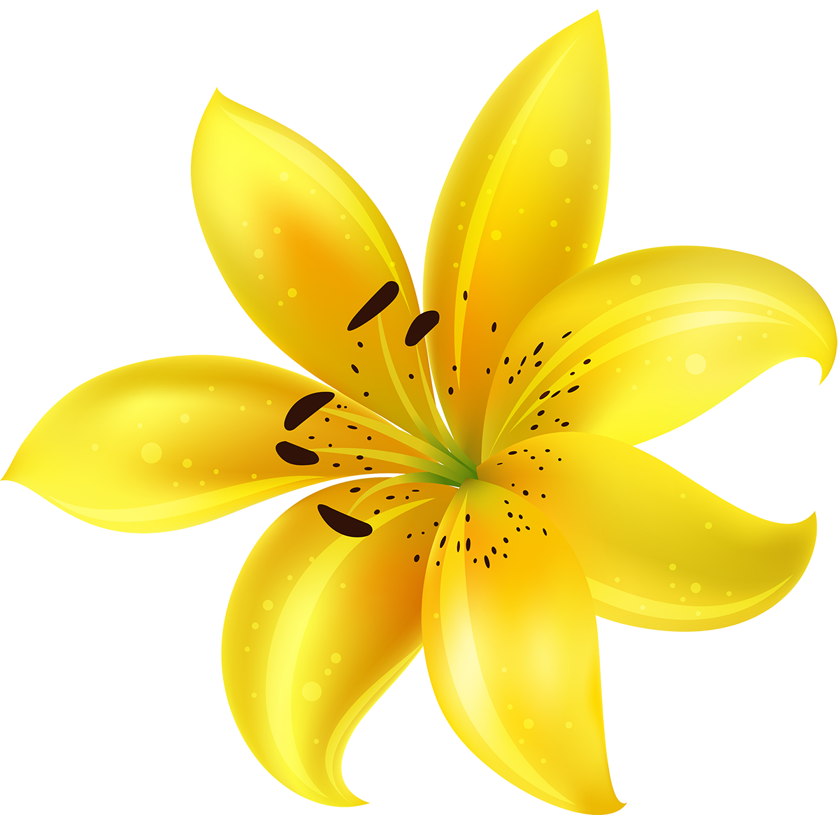 Цветок лилия картинки для детей на прозрачном фоне