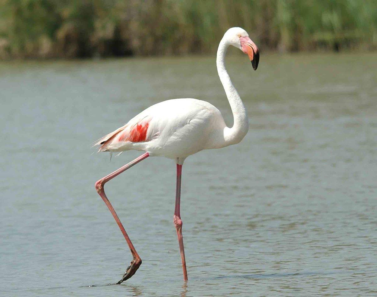 держись птица фламинго картинки будут добавлять лишнего