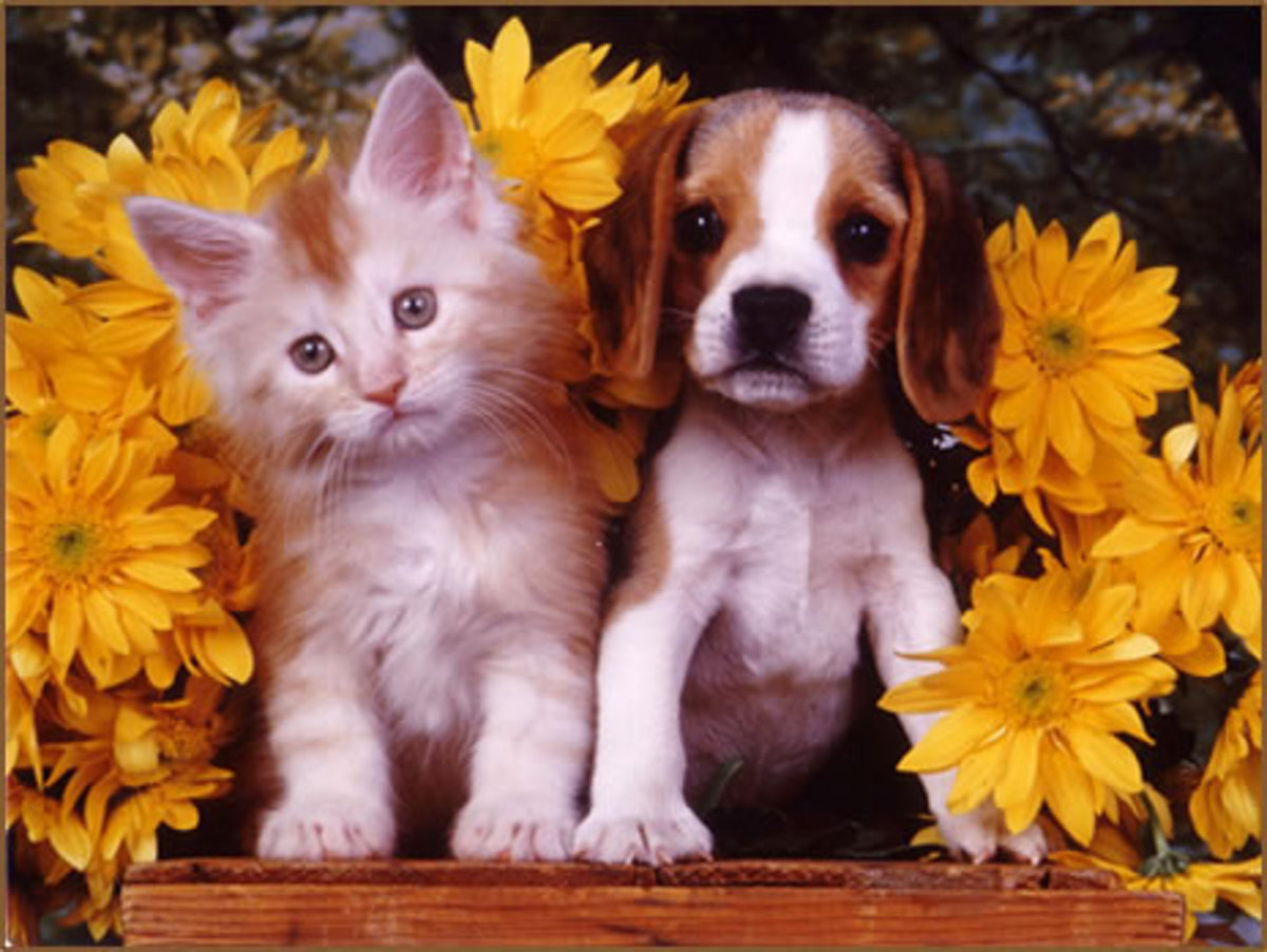 Щенок и котенок открытка