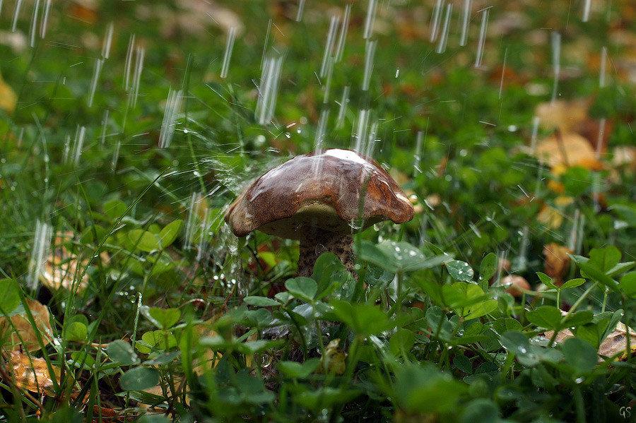 Картинки анимашки грибной дождь