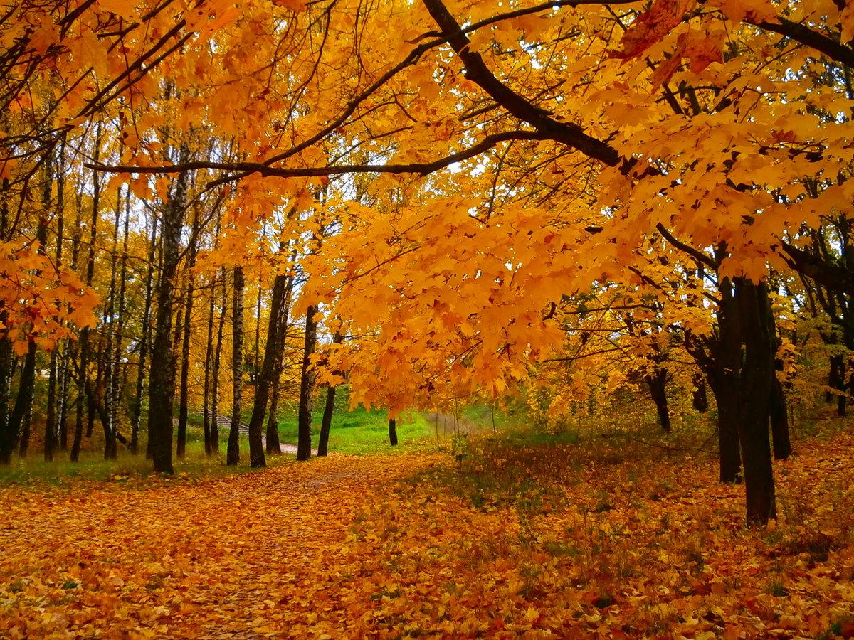 пожеланиями картинка наступила золотая осень пожалуй одно