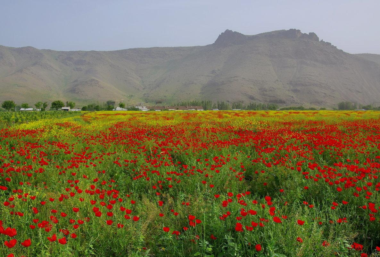 Природа узбекистана новые фото