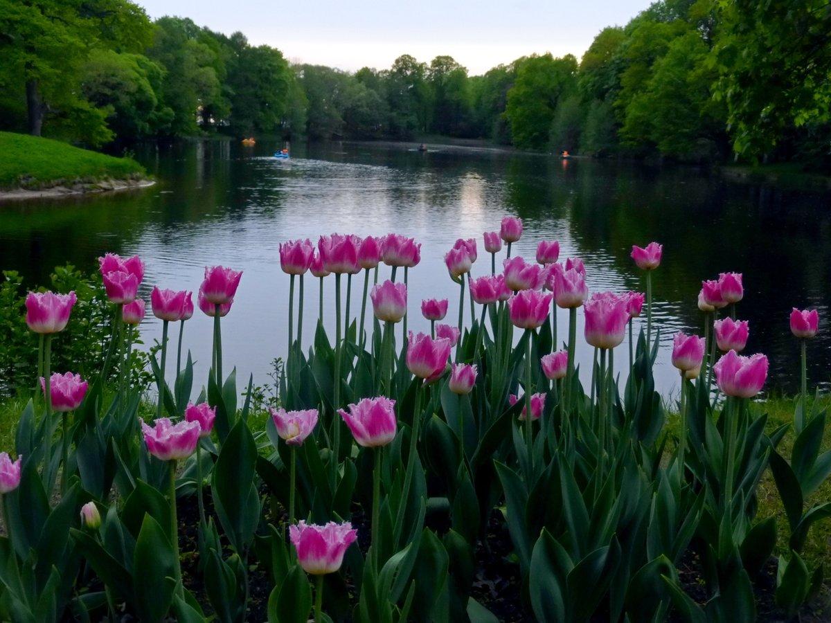 как раз самые красивые фото природа весной кто-то