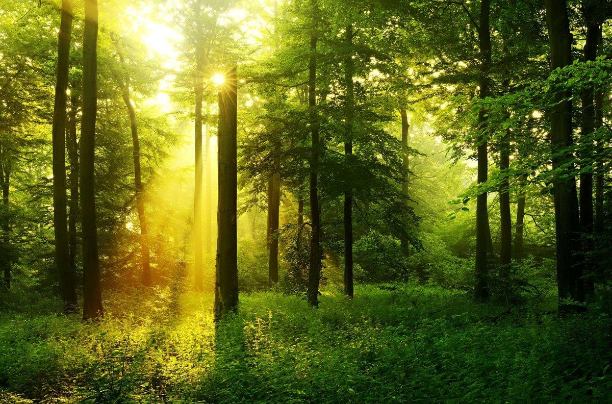 Лето фото красивые природа лес, удовольствием красивая открытка