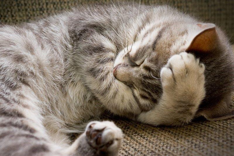 Картинки спокойной ночи кошка, летием женщине