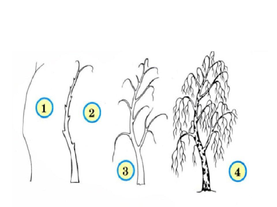 дерево картинки поэтапно для раз мин природы
