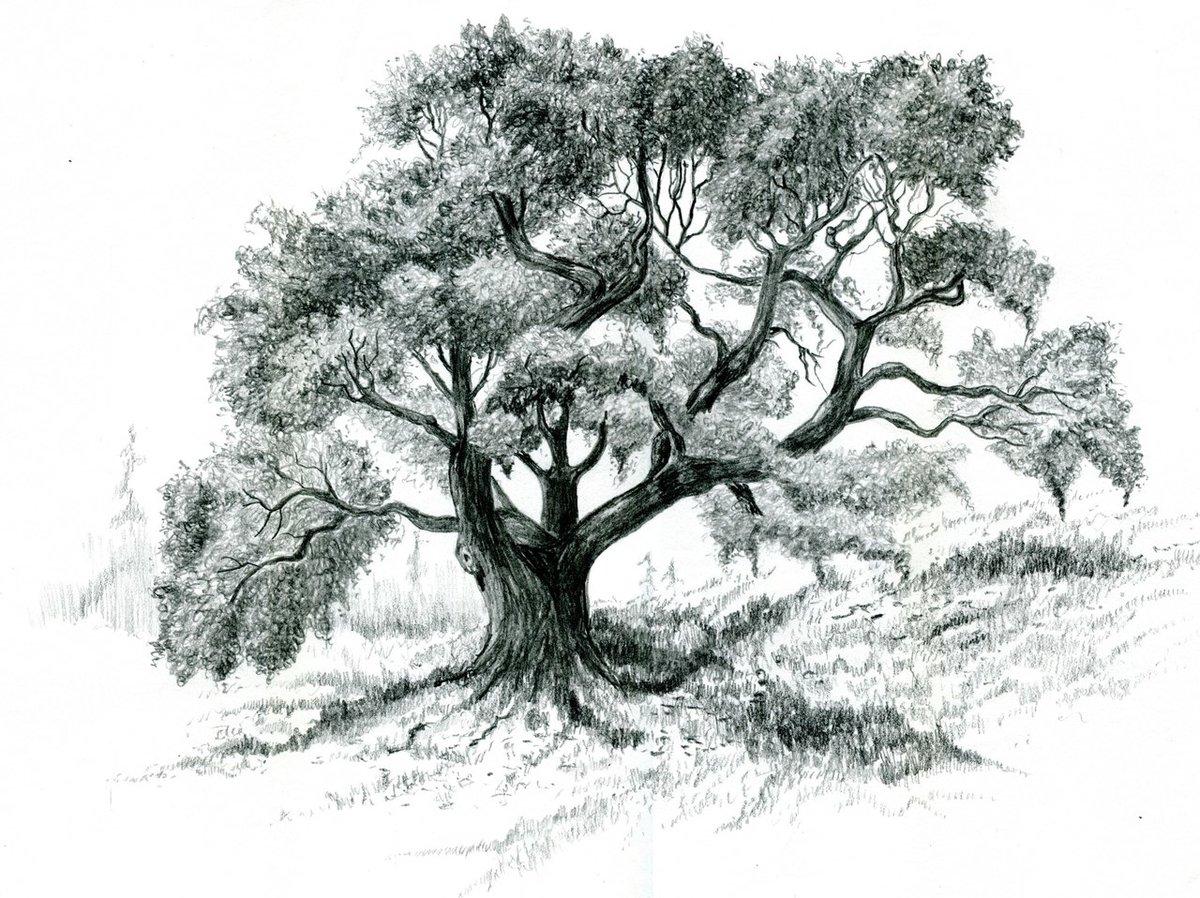 раз деревья рисунок графика кухне соль как