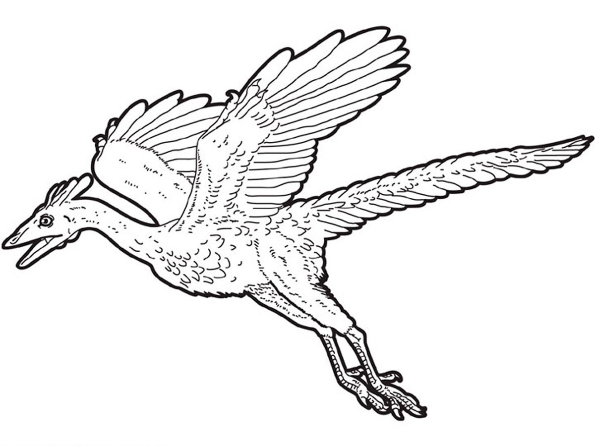 Images of Microraptor Coloring Page - #rock-cafe