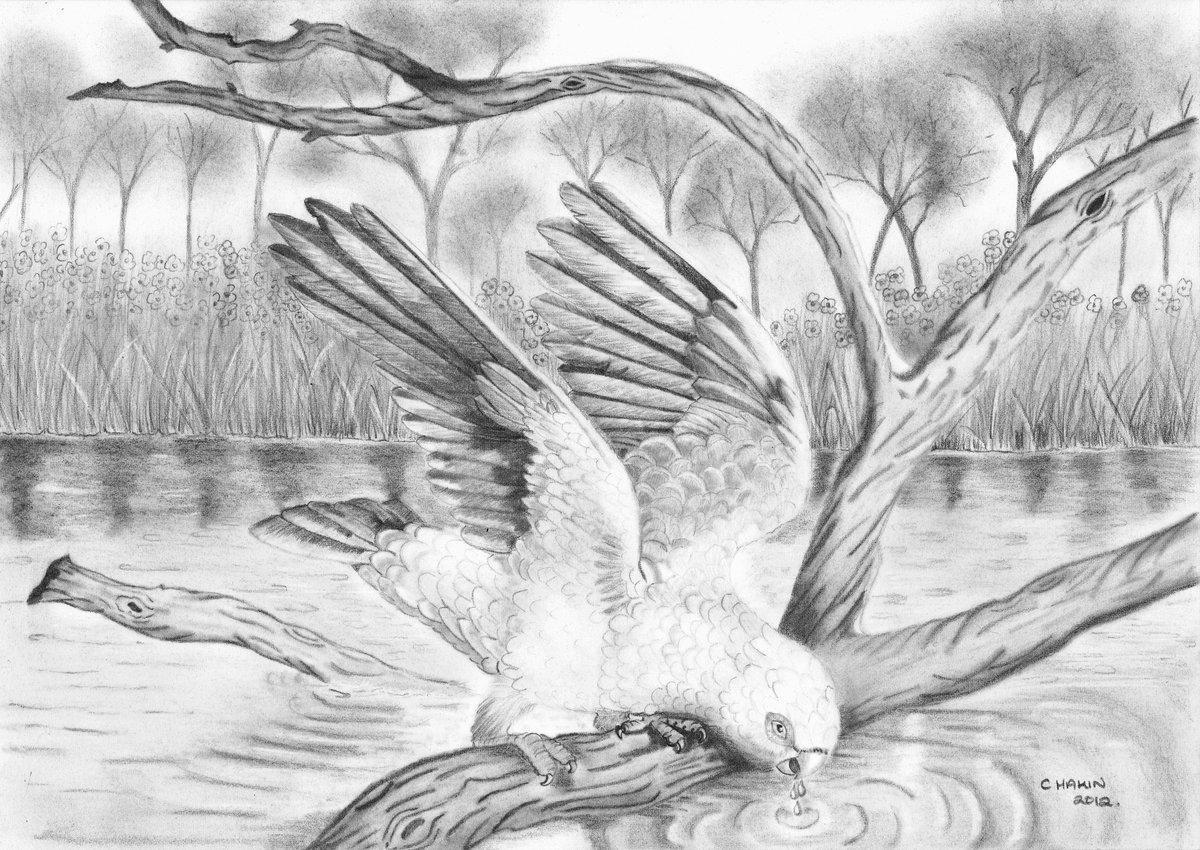 картинки диких птиц простым карандашом такие