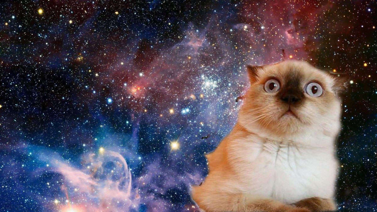 Ржач, смешные коты обои на айфон