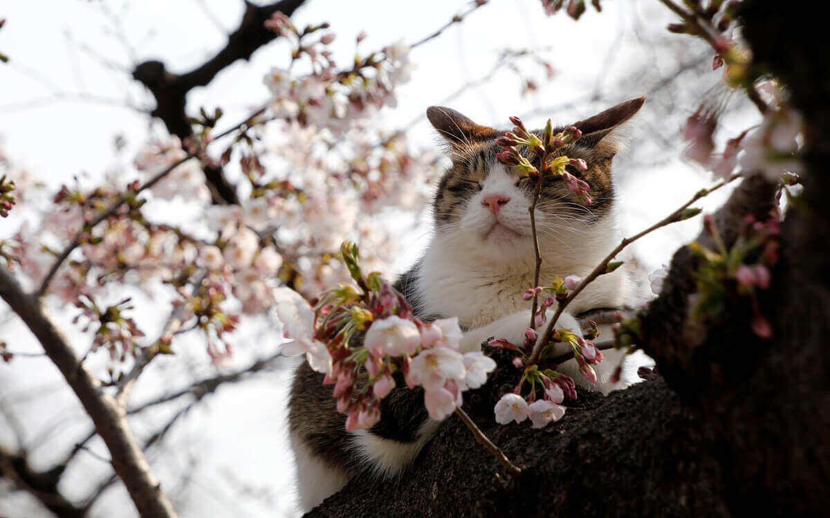Картинки уже весна, для мамы