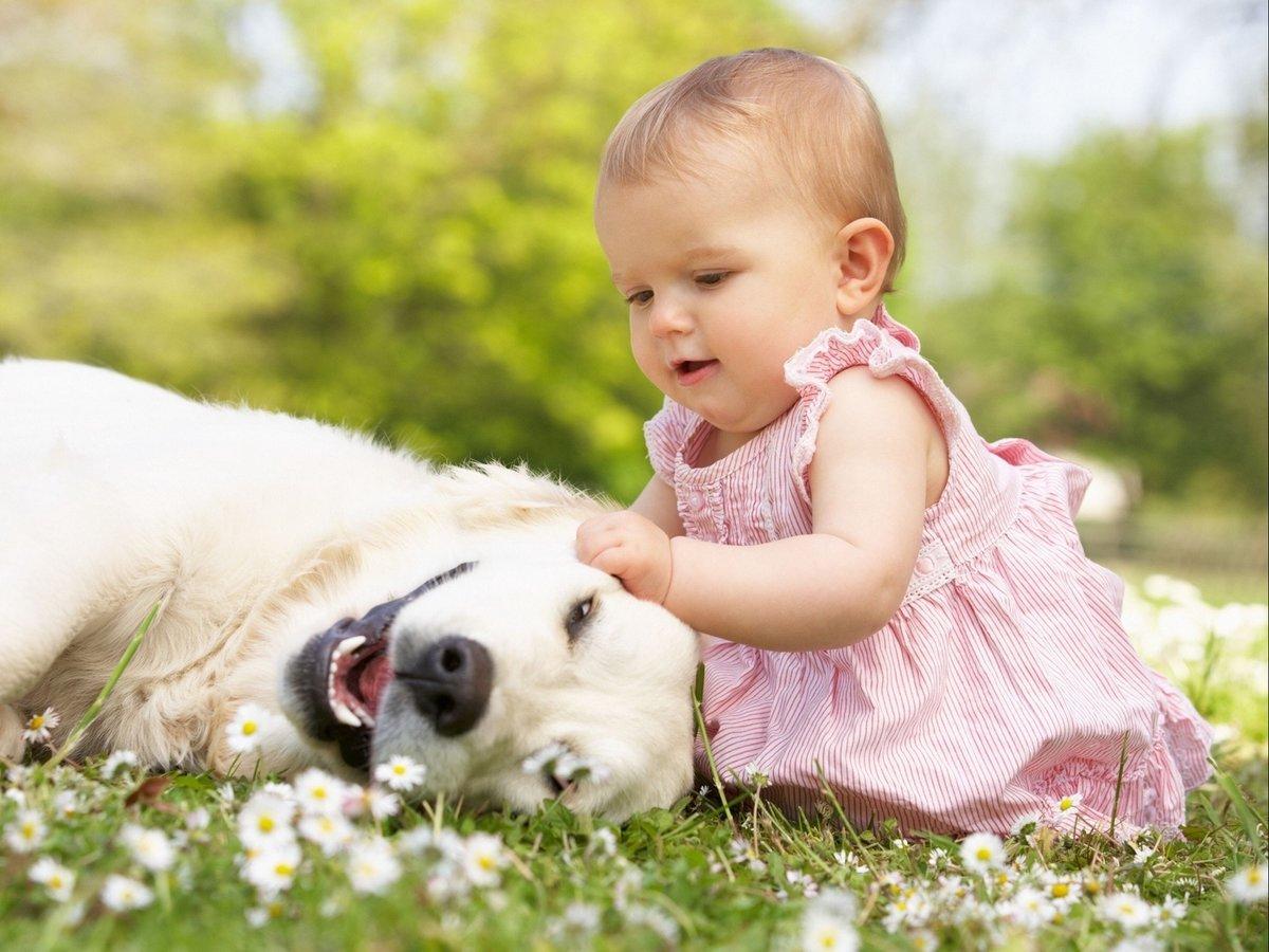 Открытки юбилеем, детские картинки животных смешные