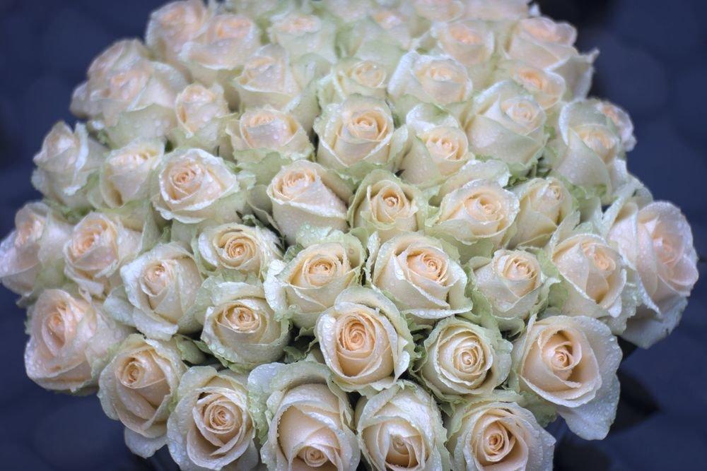 картинку с большим букетом белых роз вам