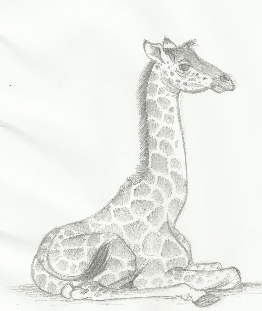 картинки для рисования жирафа ламинат интернет-магазине