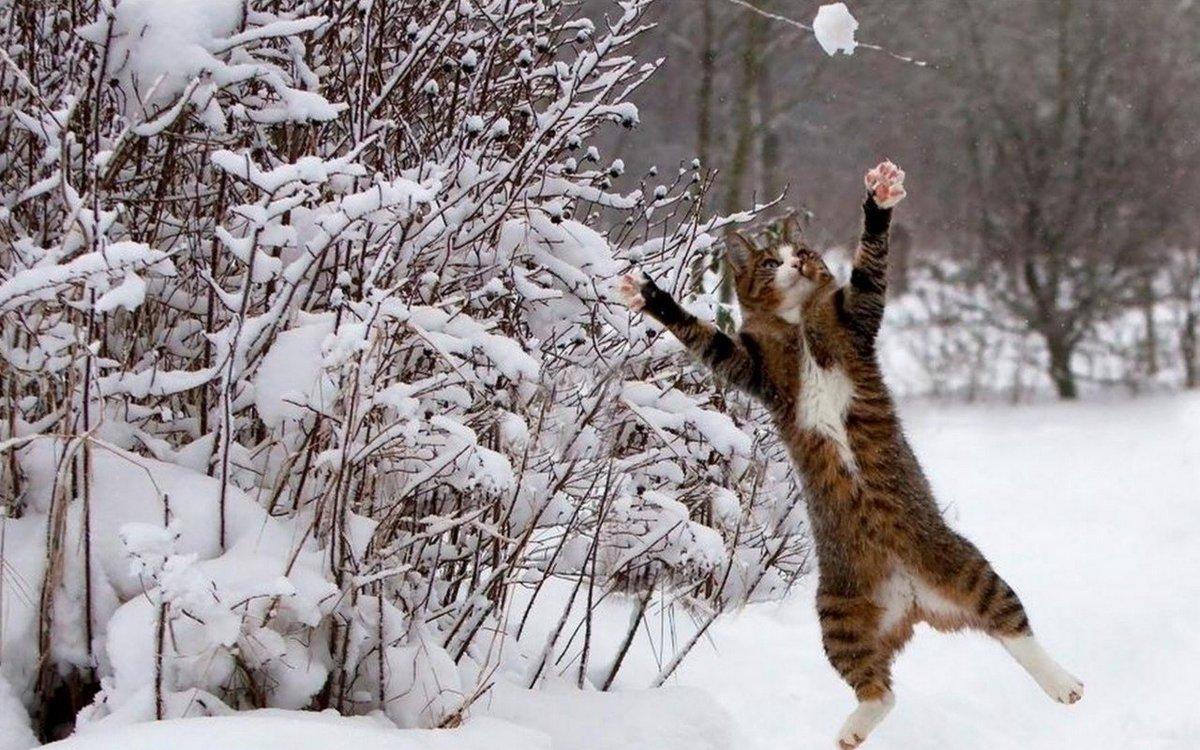 Картинки стихий, картинки зима весной прикольные