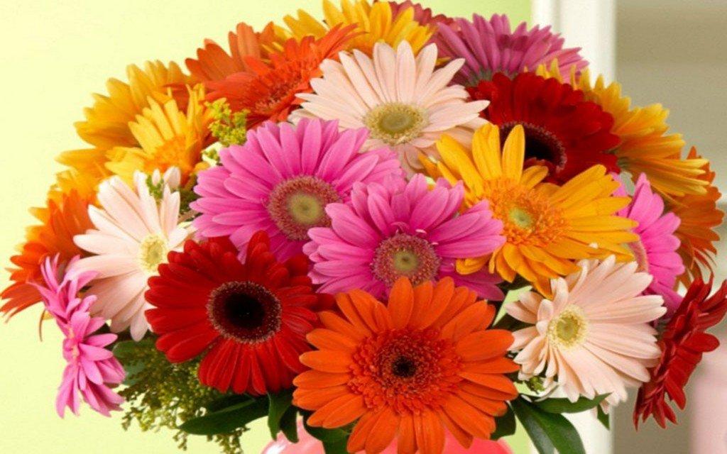 фото цветы герберы с днем рождения среди многообразия