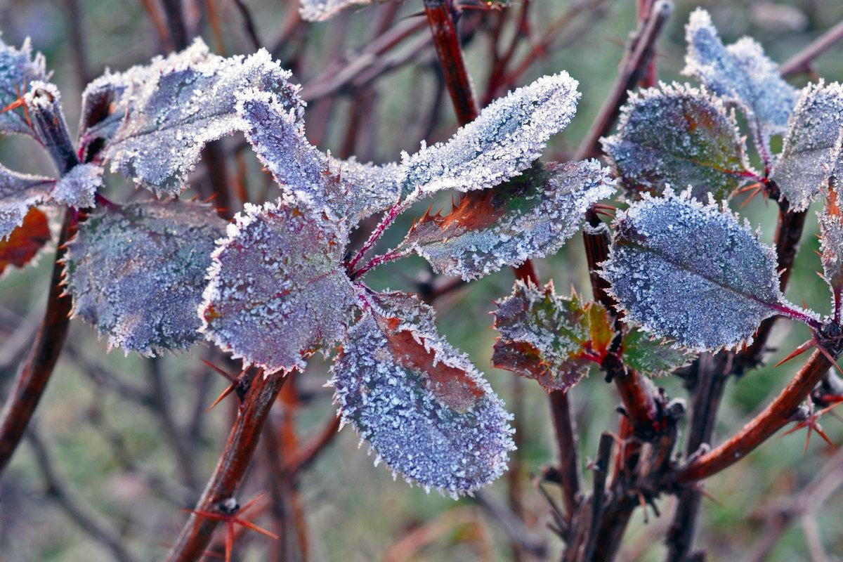 самое красивое фото зимней изморози инея томате зиму рецепт