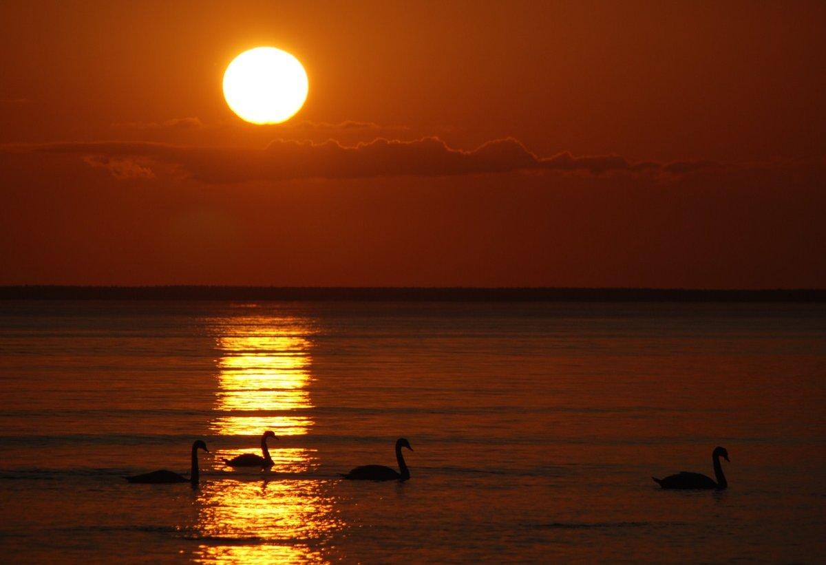 желании фото лебеди на закате солнца драгоценные камни