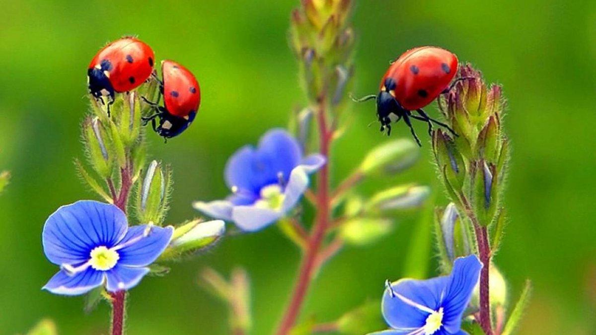 Картинка удивительный мир насекомых для детей