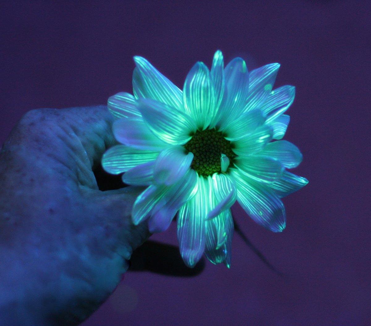 Где купить в новосибирске светящиеся цветы