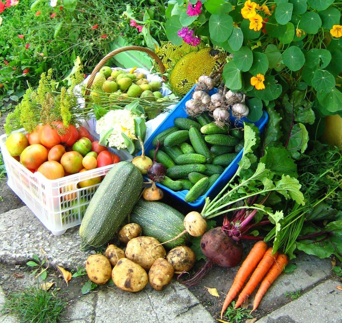 овощи огородные в картинках поздравила