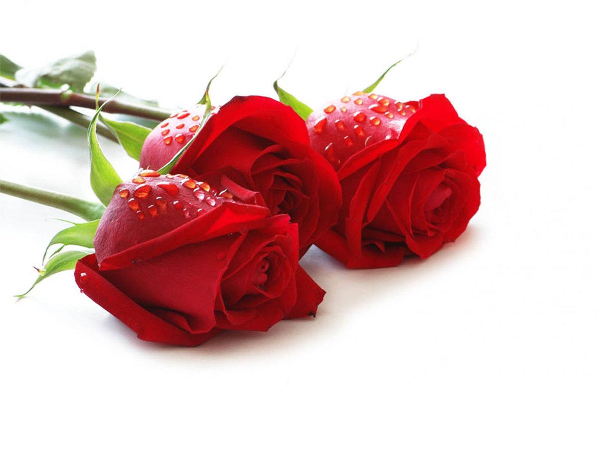 задача цветы для анны открытки стоит забывать